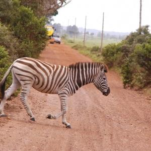 sudafrika-5